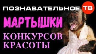 Высказывания: Мартышки конкурсов красоты (Познавательное ТВ, Владимир Базарный)