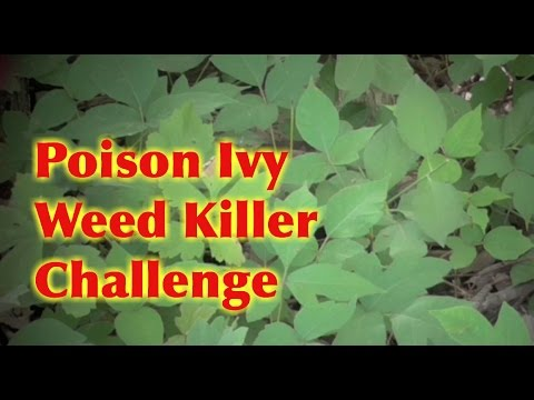 Poison Ivy Tough Weed Killer Challenge 3 Different Sprays Youtube