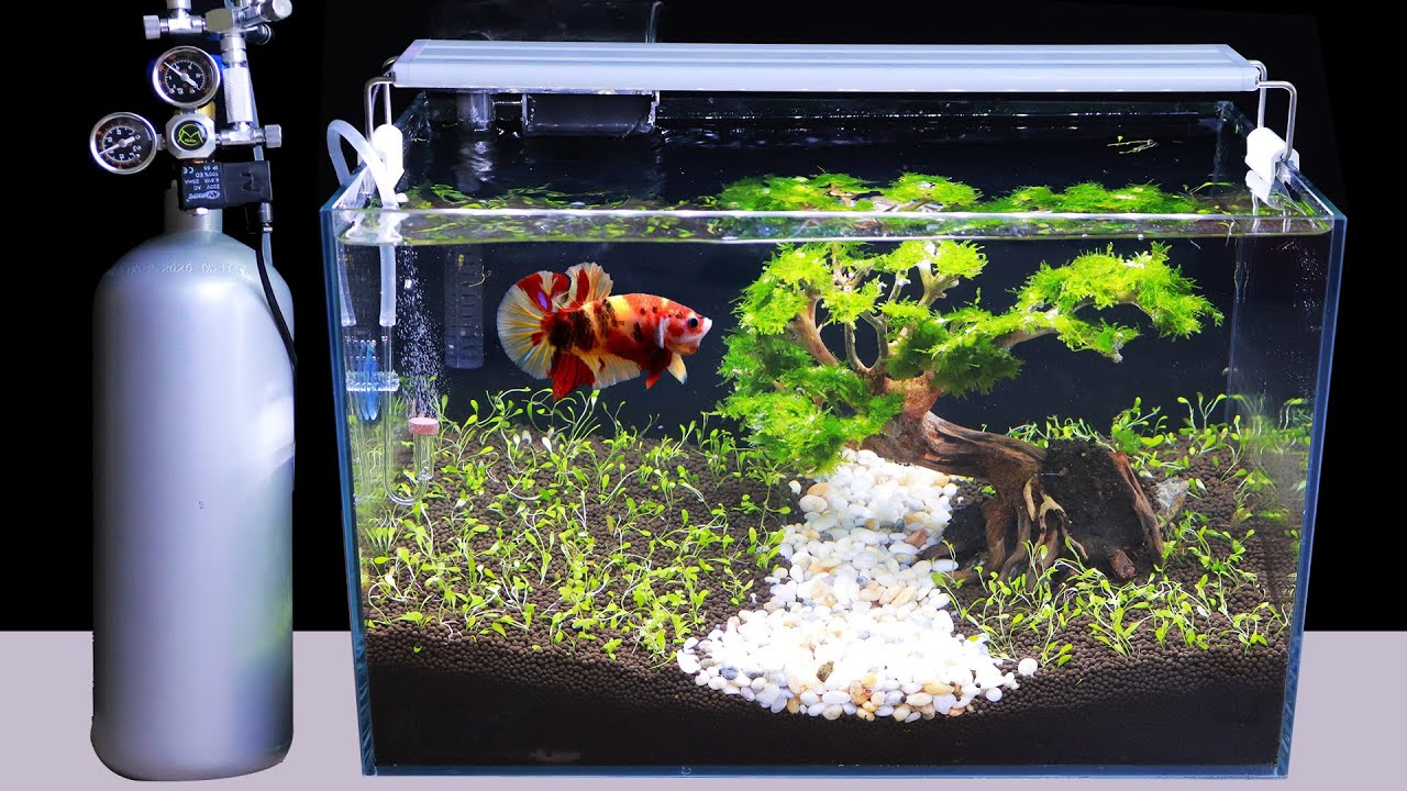 Amazing How To Grow Monte Carlo Planted In Aquarium Full Co2 Filter Light Diy Aquascape Ideas Youtube