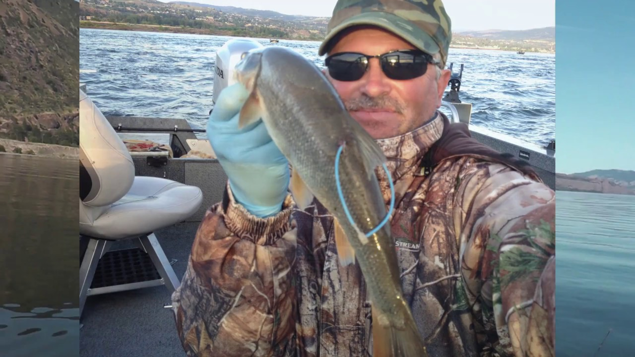 Columbia river pikeminnow fishing 2016 youtube for Columbia river fish counts