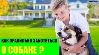 Как правильно заботиться о своей собаке?