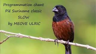 Programmation chant piko Pié suriname  slow by MEOVE Ulric.