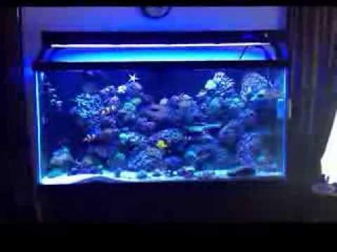 Aquaticlife T5 Ho 72 12 Bulb Light Fixture Review