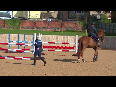 Young Horse Showjumping Training Part 3