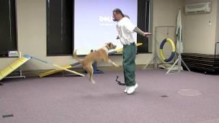 Dog Jumps Rope