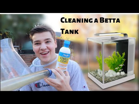 HOW TO CLEAN A *BETTA FISH TANK*