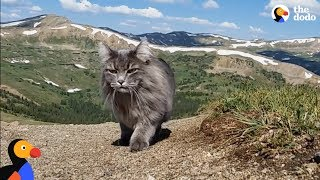 Cat Loves Climbing Mountains With Her Parents | This cat swims in rivers and scales MOUNTAINS But she went through so much before she got this brave ...