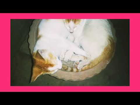 Cute kittens 😊