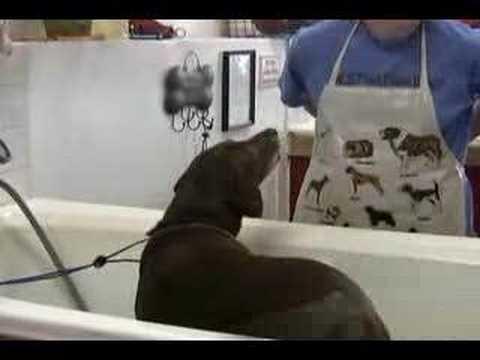 Pet paws self serve dog wash in lexington ky youtube solutioingenieria Choice Image