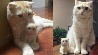 Смешные коты, кошки и другие животные (funny cats 2019) – НЕЛЬЗЯ УНЫВАТЬ, ПО НАСТОЯЩЕМУ КУРЬЕЗНО