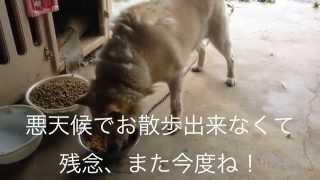 natsumint隊 福島県飯舘村での給餌活動の記録動画です。 natsumintのブ...