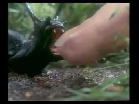 Slugs 1988 Trailer Deutsch Youtube
