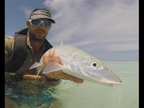 Big Bonefish on the fly in farquhar atoll in seychelles