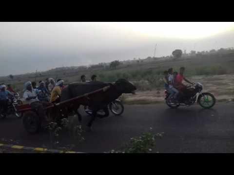 Rajiv bawli Delhi race