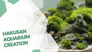 Aquascaping from project initialization to final Aquarium creation The Hakusan Film  4K video