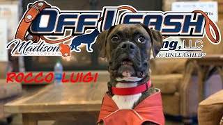 9 mo Boxer (Rocco Luigi) One Week Before and After | Best Dog Trainer Wisconsin