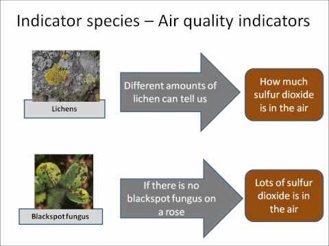 B1.32 Pollution Indicators