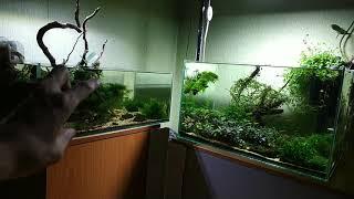 Что произошло с моими аквариумами пока меня не было 2 недели.