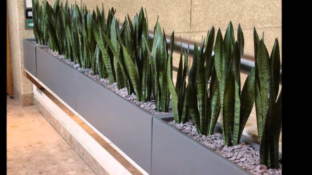 Decoracion de oficinas con plantas natural con estilo for Piedras naturales para decoracion interiores