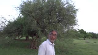 Forest in rajasthan