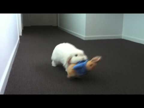Best 'Friends' CUTE Mini Lop Rabbit Drags Around Peter Rabbit Toy