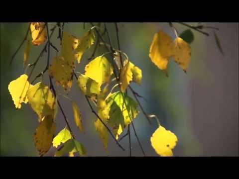 Осень -- она не спросит, Осень -- она придёт.