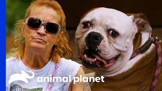 Bulldog Reunited With Family After Being Abandoned At Villalobos | Pit Bulls & Parolees