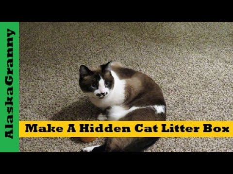 Cat Stopped Pooping In The Litter Box