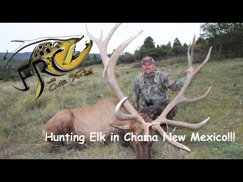 Hunting Elk In Chama New Mexico!!