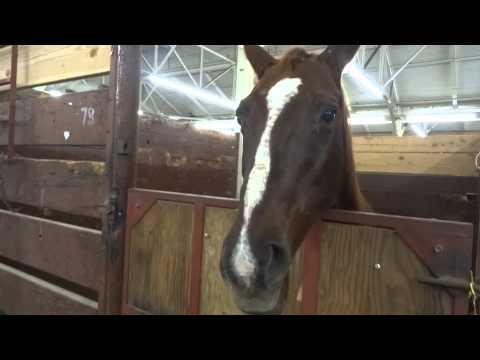 16 Horse Neigh, Snort and Gallop Sound Effects [High Qu ... - photo#18
