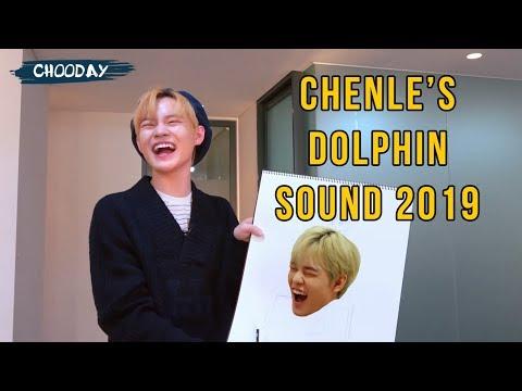 CHENLE'S DOLPHIN LAUGH & SCREAM 2019