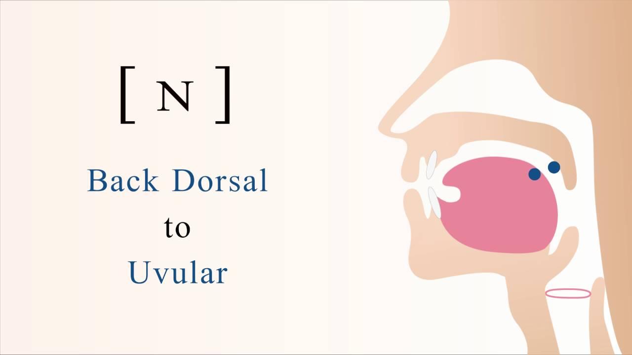 hight resolution of  voiced back dorsal uvular nasal stop