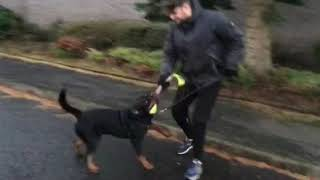 Protection dog training John and his Rottweiller In Scotland