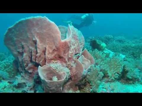 Gopro 3+ Black Revolution Lighting Scuba Diving