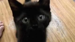 Котенок, девочка, 2 месяца. В добрые руки!