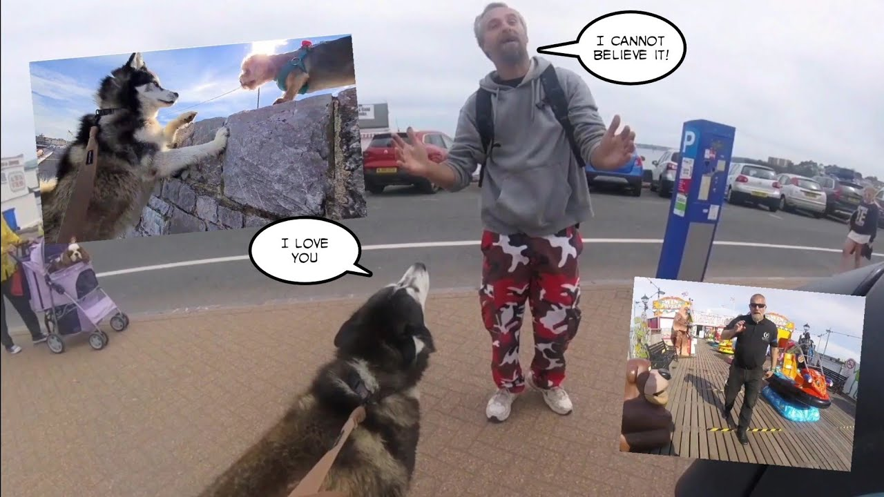Embarrassing Husky meets Biggest Fans yet! So Funny!