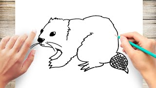 How to Draw Beaver Step by Step for Kids
