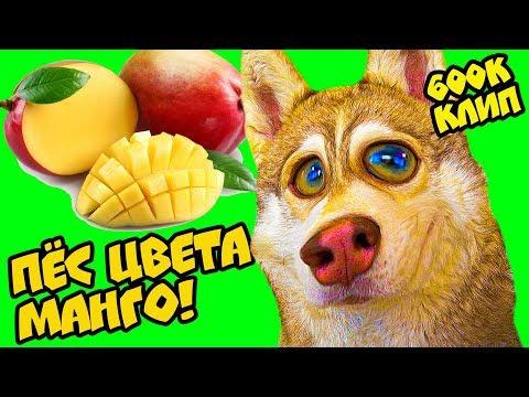 Mister Booble - ПЁС ЦВЕТА МАНГО! (Official Music Video) Хаски Бублик - говорящая собака