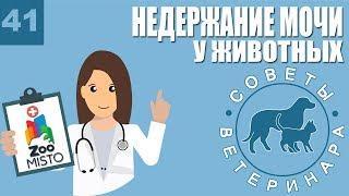 Недержание мочи у животных | Причины недержания | Симптомы и лечение болезни | Советы Ветеринара