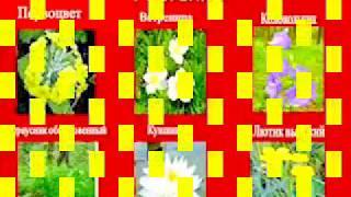 Растения и Животные Красной Книги Украины