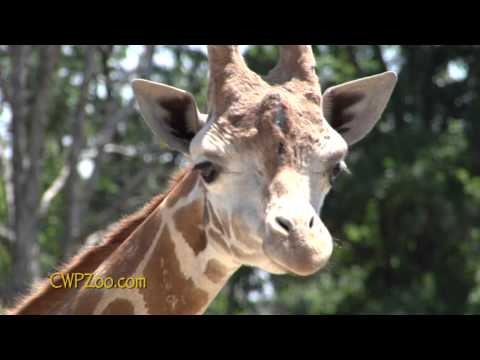 2 Minute Tour of Catoctin Wildlife Preserve and Zoo, Thurmont, MD