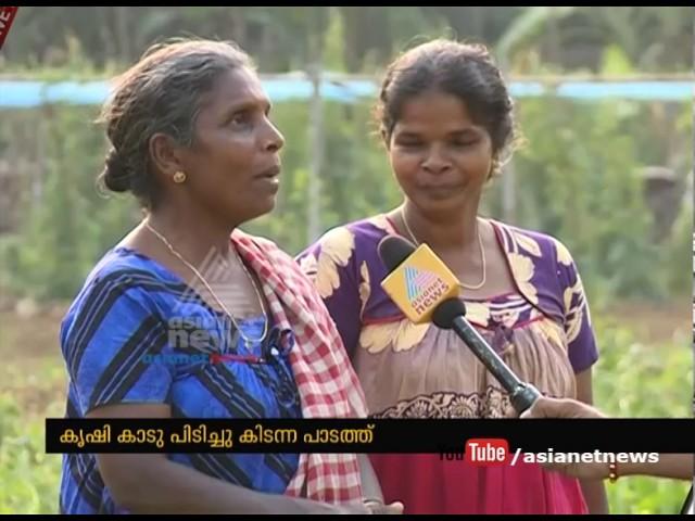 Success story of organic farming in Karimkunnam Panchayat