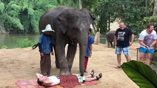 ШОУ слонов в Тайланде, путешествия в Тайланд