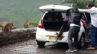 Viral video:  A monkey kidnapped  by two people