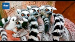 MADAGASCAR IN TOUR, tra natura incontaminata e mille colori(, 2016-03-25T16:16:14.000Z)