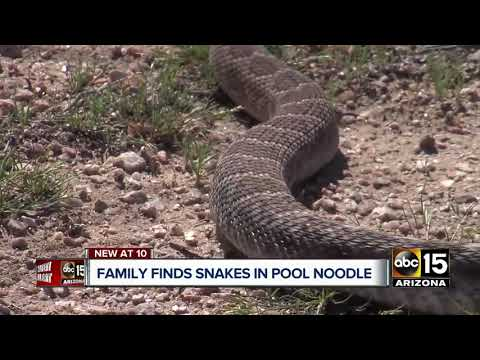 Buckeye family reports finding rattlesnakes inside pool noodle