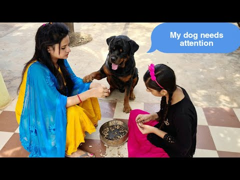 Sapna and Anshu are ignoring my dog jerry||funny dog video.
