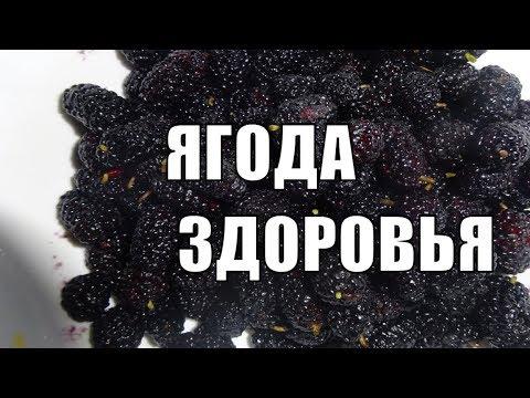 Шелковица или тутовник ягода здоровья