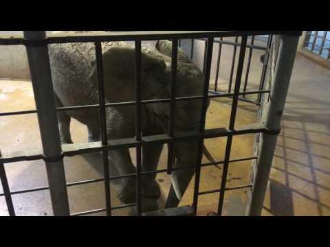 Elefantenhaus Zoo Basel