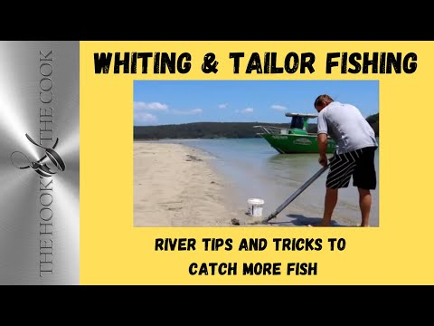 Fishing the Port Hacking river | The Hook and The Cook